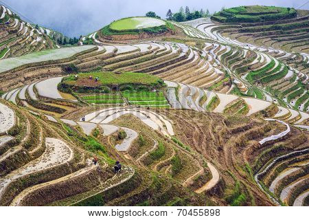 Rice terraces in Guilin, China.