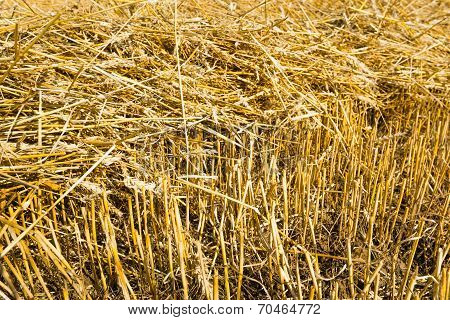 Straw On The Stubble  Field From Close