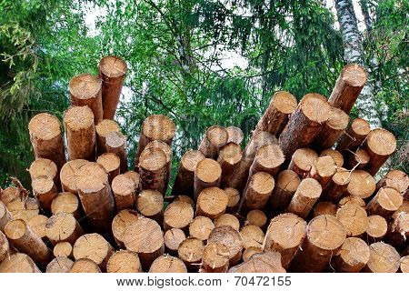 Industrial Logging