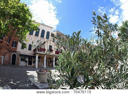 Olive Tree In The Square Of The Jewish Ghetto Of Venice In Italy