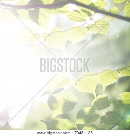 Bright Ethereal Spring Leaves Background