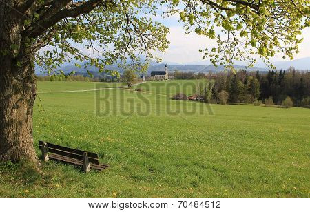 Old Linden Tree And Bench, Pilgrimage Church Wilparting