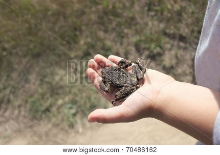 Hand With A Toad