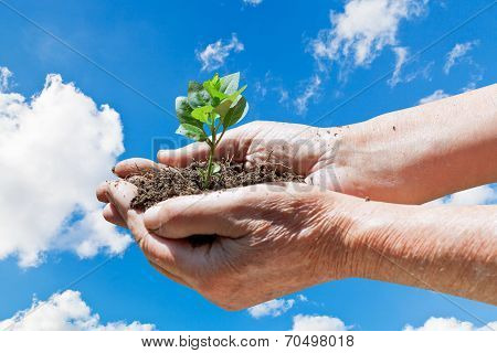 Male Hands With Handful Soil And Green Sprout