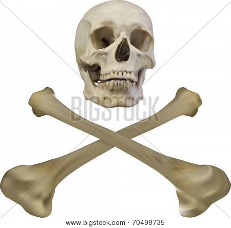 illustration with skull and bones isolated on white background