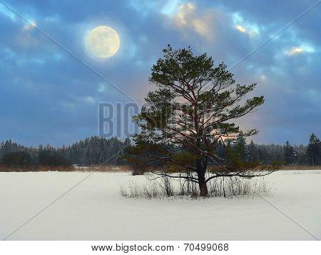 Mystic Moonlight Scenery In The Moor