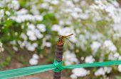 image of fly rod  - dragon fly on the rod in flower garden - JPG