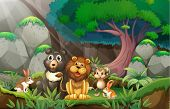 picture of rainforest animal  - Illustration of many animals in the jungle - JPG