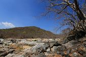 image of drought  - Dried trees in the drought forest inside drought empty Song Long Song  - JPG