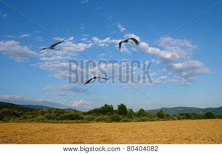 Fflying storks