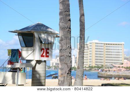 Waikiki Beach Lone Tree