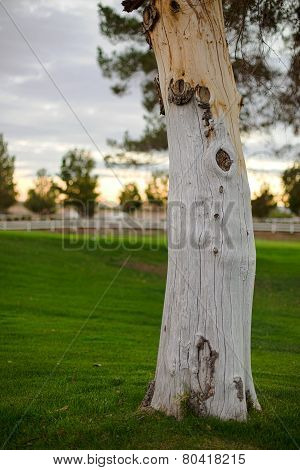 A Knotted Tree