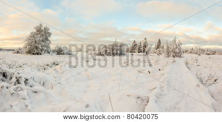 Hoge Venen In Snow