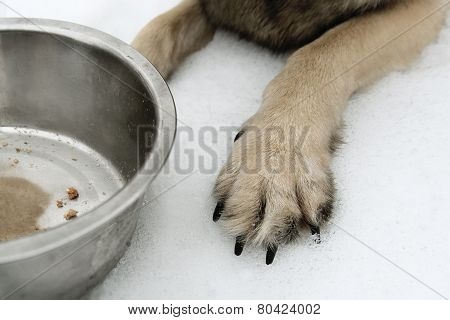 Dog Guarding Bowl
