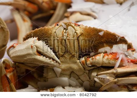 Happy Dungeness Crab