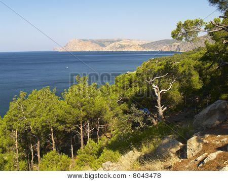 Slopes, Firs, Sea And Coastline