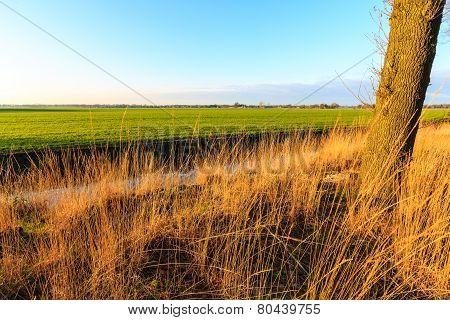A Grassland At Sunset In A Dutch Landscape