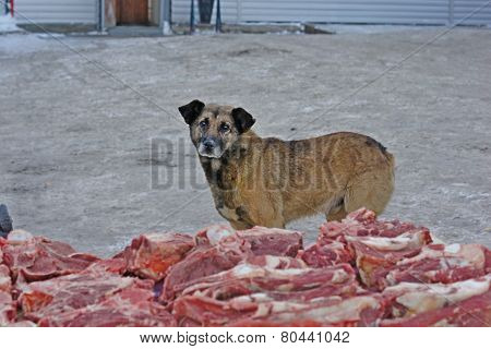 Hungry stray dog