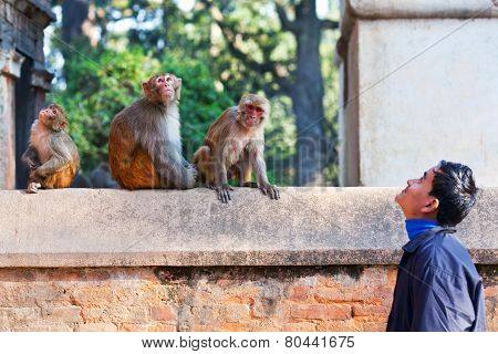Nepalese man teasing monkeys
