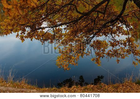 Yellow Branch Over A Pond