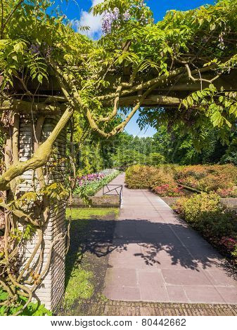 Wisteria covering a walkway