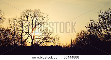 Sunset In Riga - Vintage Filter. Yellow Sun Through The Tree Branches.