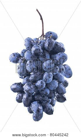 Oval Wet Blue Grapes Bunch Isolated On White Background