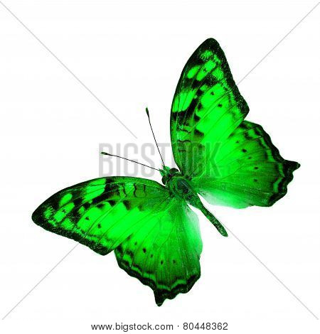 Exotic Flying Green Butterfly In Fancy Color Profile Isolated On White Background (vagrant Butterfly