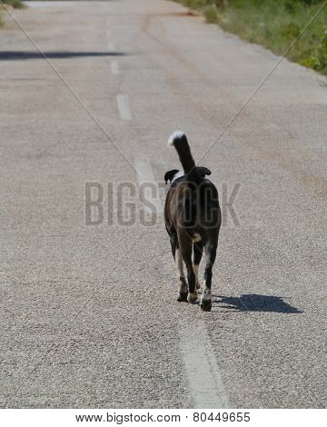 A dog on the center line of a road