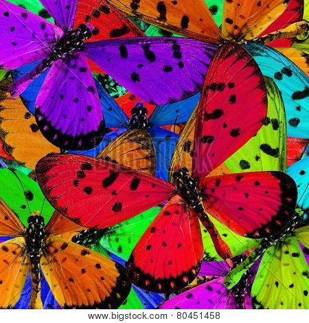 Exotic Of Background Texture Made Of Tawny Costner Butterflies In Great Patterns