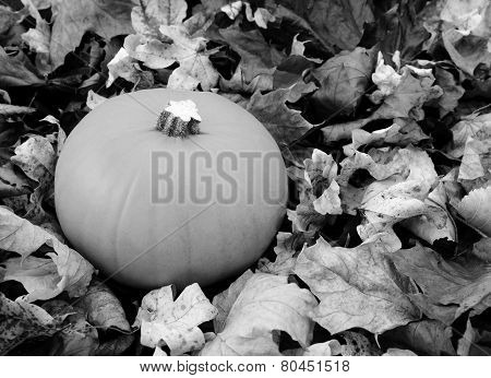 Ripe Pumpkin Among Dry Autumn Leaves