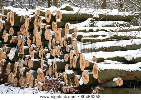 Stacked Wood Logs
