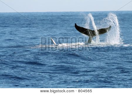 swirling whale tail