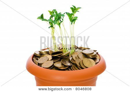 Green Seedling Growing From The Pile Of Coins