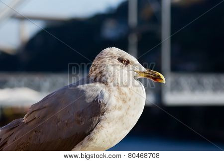 One White Seagull