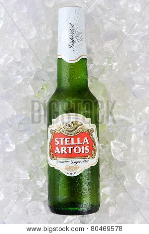 Stella Artios On Bed Of Ice Vertical