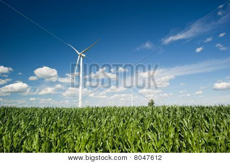 Wind Turbines In Corn Field