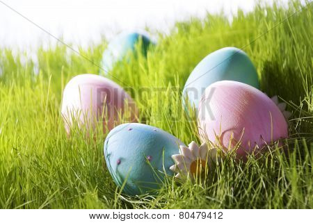 Many Decorative Easter Eggs On Green Grass With Marguerite Blossom