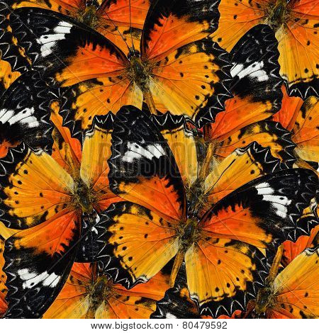 Pile Up Of Malay Lacewing Butterfly In Full Framing