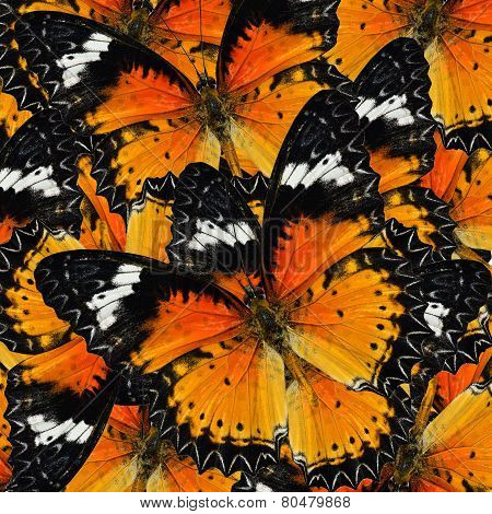 Pile Up Of Many Beautiful Malay Lacewing Butterflies In Full Framing Background Texture