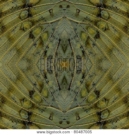 Very Best Of Background Pattern Made Of Great Marquis Butterfly Wing Skin Texture