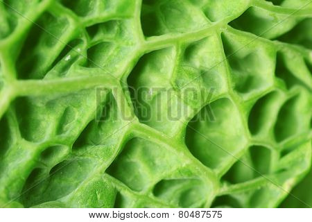 Leaf of savoy cabbage, macro view