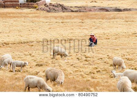 Shepherd Managing Her Flock, Peru