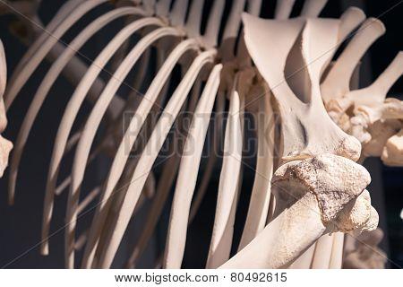 Bones closeup photo of ribs