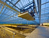 foto of picking tray  - A robotic pick and place unit in a tungsten lit glasshouse arranging trays of lilies at dusk - JPG