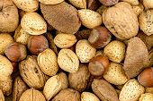 foto of brazil nut  - Brazil nuts hazelhuts walnuts and almond background texture - JPG
