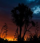 stock photo of flax plant  - Cabbage tree and some flax plants silhouette with a wonderful sunset sky - JPG