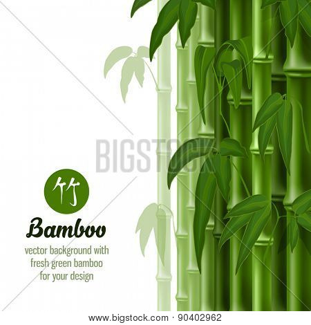 Vector card with bamboo on white background.