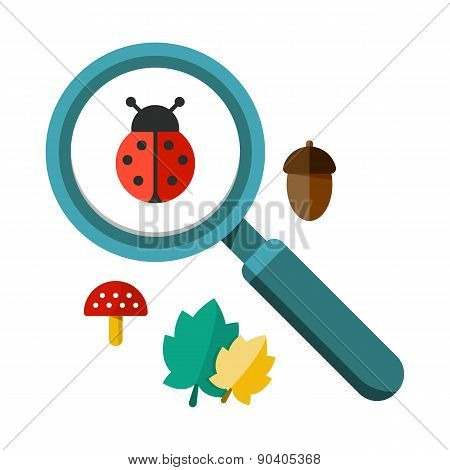 Ladybug And A Magnifying Glass