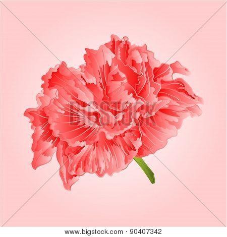 Tropical Flowerspink Hibiscus Vector